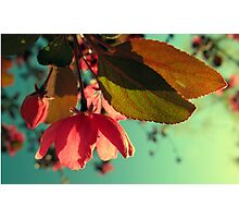 Afternoon Delight Photographic Print