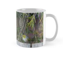 Two Silvereye Mug