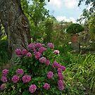 Hydrangeas of Afton Villa St. Francisville by Bonnie T.  Barry