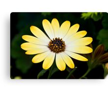 Yellow Minesweeper Canvas Print