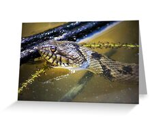 Water Snake Greeting Card