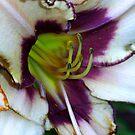Purple Edge by Sunshinesmile83
