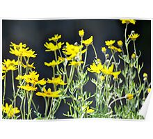 Wildflowers Newport, Oregon Poster