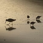 Pfeiffer Beach Sandpipers by jdbussone