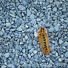 Caterpillar on Walkway  by Tamara Lindsey
