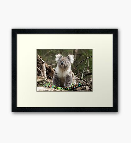 Koala saying Hello Framed Print