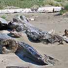 Driftwood on Oregon Coast by Tamara Lindsey