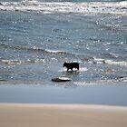 Dog on Beach Newport, Oregon by Tamara Lindsey