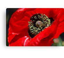 Red Poppy Macro Canvas Print