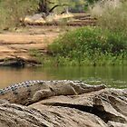 Croc on a rock by georgieboy98
