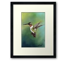 Ruby Throated Hummingbird Pastel Painting Framed Print