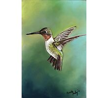 Ruby Throated Hummingbird Pastel Painting Photographic Print