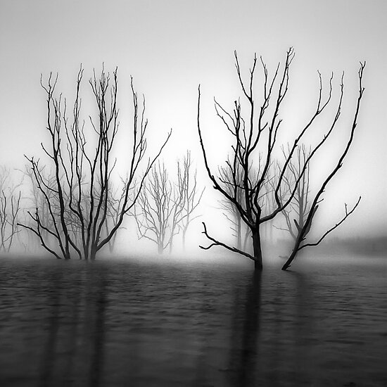 Foggy Dawn at Lake Eildon #2 by Jason Green