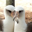 Lovebirds by Gina Ruttle  (Whalegeek)