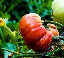 tomato tomato by Krystal Boelte