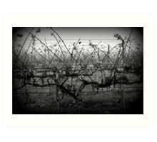 Winter Vineyard, Near Carlyle Cemetery, Rutherglen Art Print
