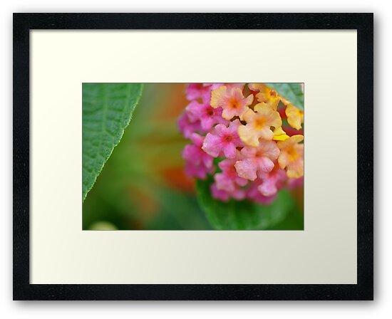 Shy Bouquet by Ainsley Kellar Creations