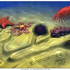 Echinodermata by Daniel Brown