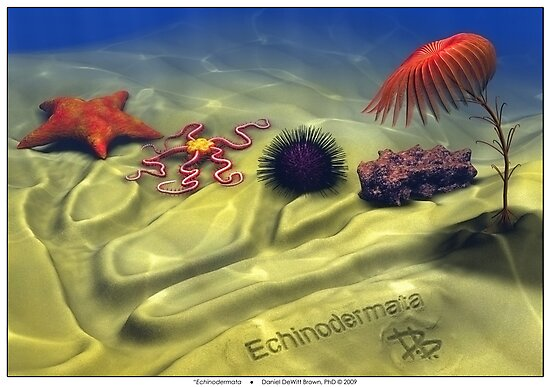Echinodermata by Daniel Brown