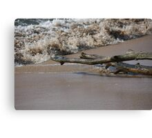 Driftwood On The Shore Canvas Print