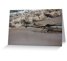 Driftwood On The Shore Greeting Card