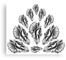 Broken Shells in Black and White Canvas Print