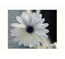 White beauty Art Print