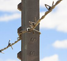 Barbed Wire by CarrieAnn