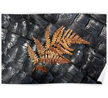 Dried Fern on a charred log Poster