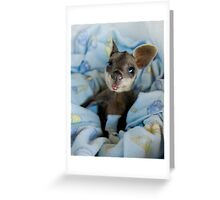 baby wallaby Greeting Card