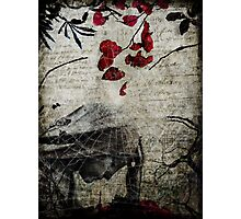 Rain of Rose Petals Photographic Print