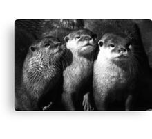 Asiatic Otters Canvas Print