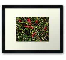 Holly with berries Framed Print
