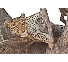 Watchful leopard Photographic Print