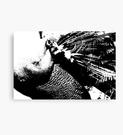Monochrome Peacock Canvas Print