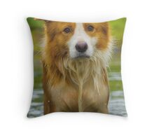 Border Collie intent stare Throw Pillow