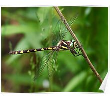 Michigan Dragonfly Poster