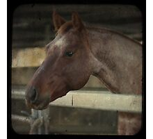 Engaged Horse Photographic Print