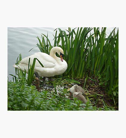 Motherhood at Kew Gardens London UK Photographic Print