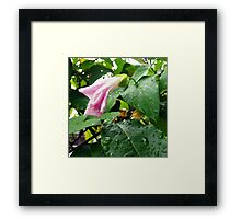 Lonely in the rain Framed Print