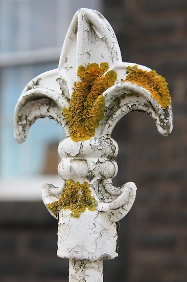 The trouble with lichen by Christine Oakley