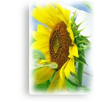 Smiling Canvas Print