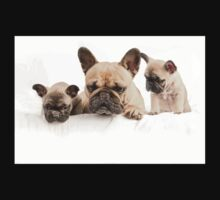 Frenchie Family One Piece - Short Sleeve