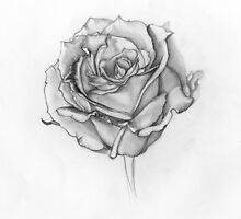 White Rose by Jessica S Kemp
