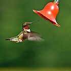 Ruby Throat Hummingbird by Kathy Weaver