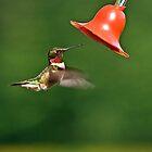 Ruby Throat Hummingbird by Kathy Weaver