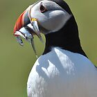 The Puffin Fisherman by ApeArt