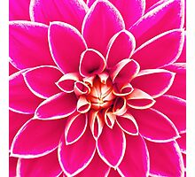 Bright girly pink white dahlia flower  Photographic Print