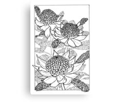 Australian Flower Series - Waratah B&W Canvas Print