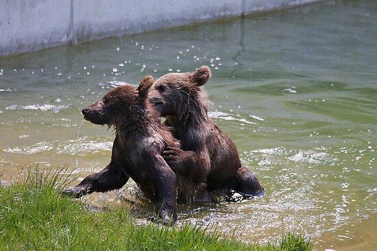 New Bear park Bern, Switzerland by eveline